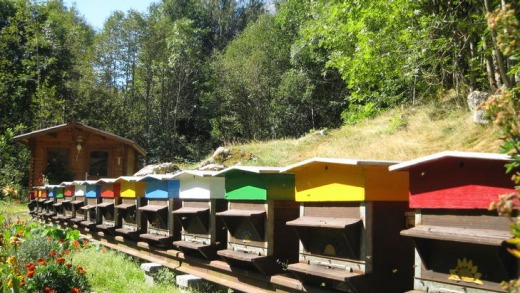 Beehives at Champex.