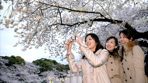 The Japanese appreciate splendour on a small scale, such as in the gentle perfection of a cherry blossom.