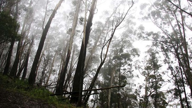 """Spiritual signpost ... Mount Gulaga is shrouded in a mist the Yuin people call a """"possum cloak""""."""