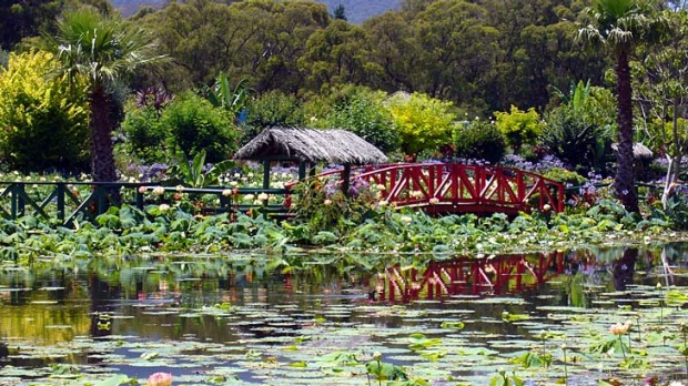 Fresh take ... appetites and a love of flora are catered for at Blue Lotus Water Garden.