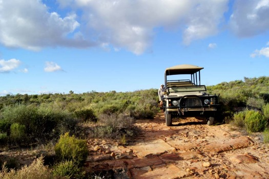 Guests are taken on drives into Bushmans Kloof's nature reserve.