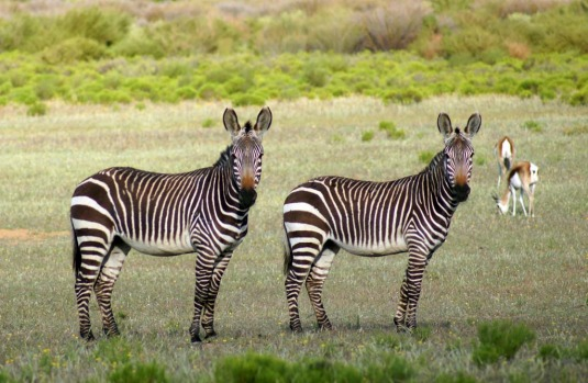 There are no major predators in the region, but 35 mammal species are found in the area, including zebras.