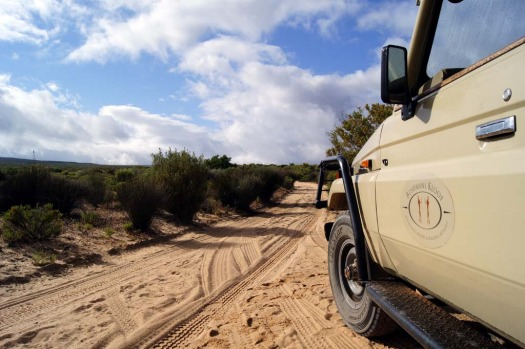 Daily nature drives are included for Bushmans Kloof guests.