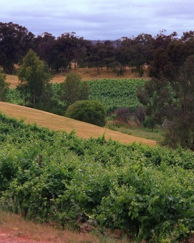 Historic and fertile ... the Swan Valley.