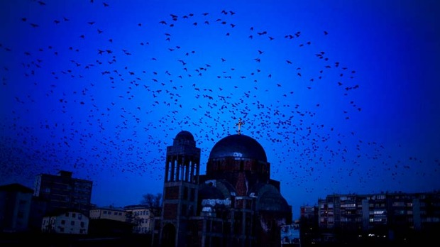 Curious ... birds fly by the abandoned Orthodox Church in Pristina, Kosovo.