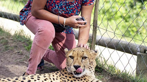 Violet plays with the 'tame' cheetah at the Kragga Kamma game reserve near Port Elizabeth.