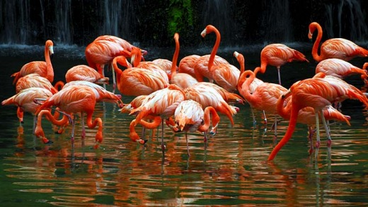 Flamingos at Jurong Bird Park.