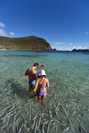 Pristine ... fishy business just off the beach at Lord Howe Island.