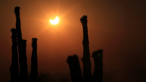 The annular solar eclipse appears between aguaro cactus arms in Phoenix in the US.