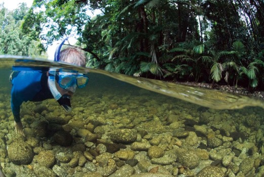 Drift-snorkel in a rainforest. Mossman River, far north Queensland.
