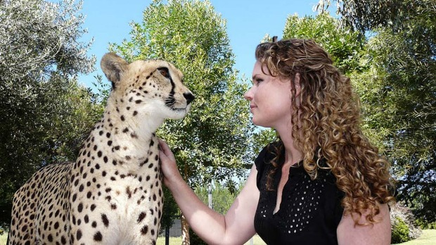 Making friends with a Cheetah at National Zoo.