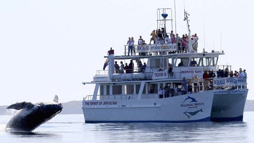Coast to crests... experts are tipping this whale-watching season to be one of the best.