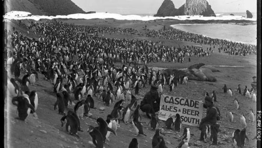Cascade ales & beers reach farther south [penguins, sea elephants, a man wearing a hat and holding a sign and several other men on the Nuggets beach, Macquarie Island, Australasian Antarctic Expedition, 1911-1914] National Library of Australia.