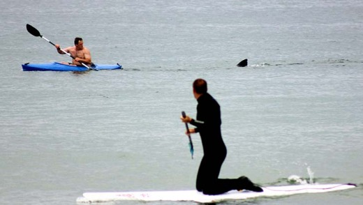 Walter Szulc Jr., in kayak at left, looks back at the dorsal fin of an approaching shark at Nauset Beach in Orleans on ...