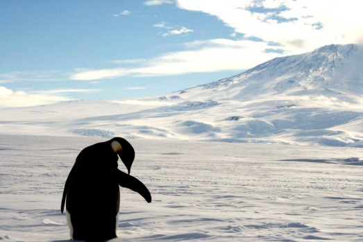 Antarctica. Penguins, penguins, penguins. They quickly become an obsession: getting the perfect close-up, the perfect ...