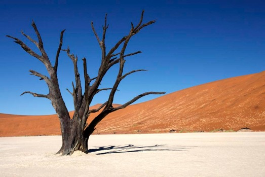 Deadvlei, Namibia. In the Sossusvlei area of the Namib Desert lies a clearing full of perfect contrasts: the cracked ...