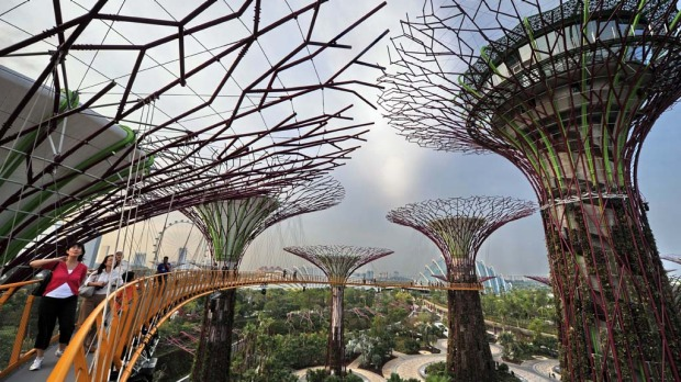 Visitors meander on the skyway walk linking across the towering Supertrees Grove in the Garden by the Bay.