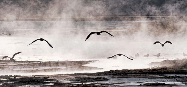 Seagulls fly over thermal water near the small village of Agua Brava, more than 4000 meters above sea level, in the ...