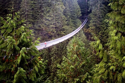 The Capilano Suspension Bridge is 136 metres long and 70 metres above the Capilano River.