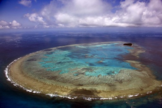 Part of the same island chain, Lady Musgrave Island has much in common with Wilson Island, including its flora and fauna ...