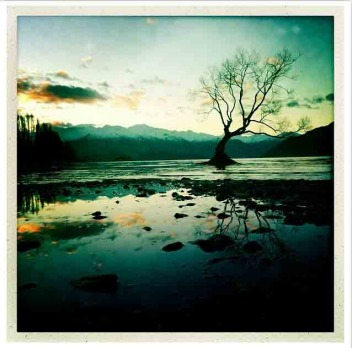 Week seven: One tree wanaka by @danhimbrechts