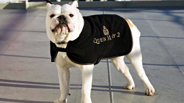 The Queen Mary 2 has kennels onboard allowing dogs to cruise.