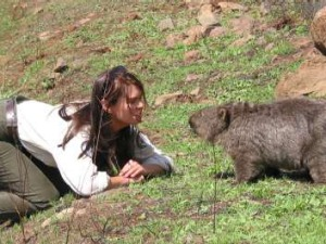 Ranger Meg comes face to face with a wombat shortly after the Canberra 2003 fires