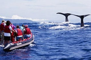 Whale watchers in Azores Islands, Portugal.