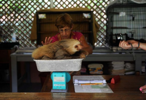 Claire, a worker at the Sloth Sanctuary in Penshurt.