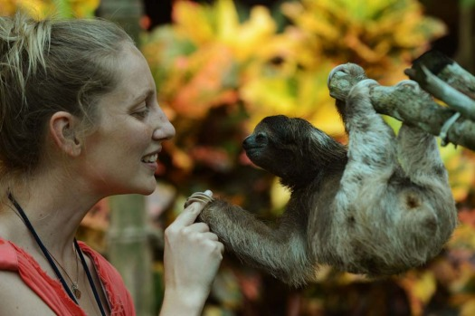 A volunteer at the Sloth Sanctuary plays with a brown-throated sloth (Bradypus variegatus) at the sanctuary in Penshurt, ...