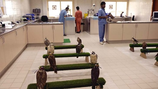 A less than conventional attraction ... the Falcon Hospital, Abu Dhabi.