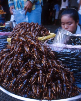Local flavours ... fried grasshoppers at a market in Phnom Penh.