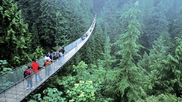 Green dream ... the Capilano Suspension Bridge.