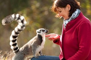 Encounter with a lemur, Mogo Zoo