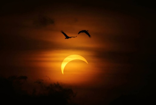 Two Magpie Geese fly past the Solar Eclipse over Ubirr Rock in Kakadu National Park.