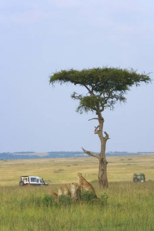 The Masai Mara game reserve in Kenya.