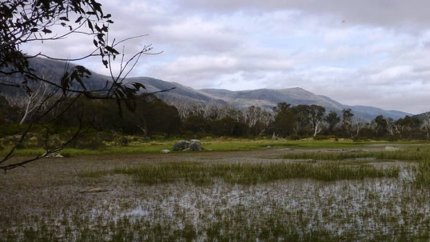 Muzzlewood wetlands - an ephemeral wetland on the Thredbo River Track.