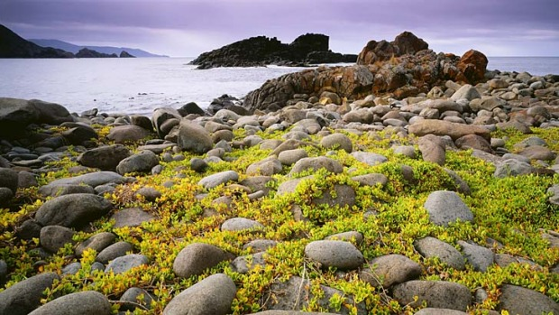 Wild beauty ... Bruny Island's dramatic coastal scenery.