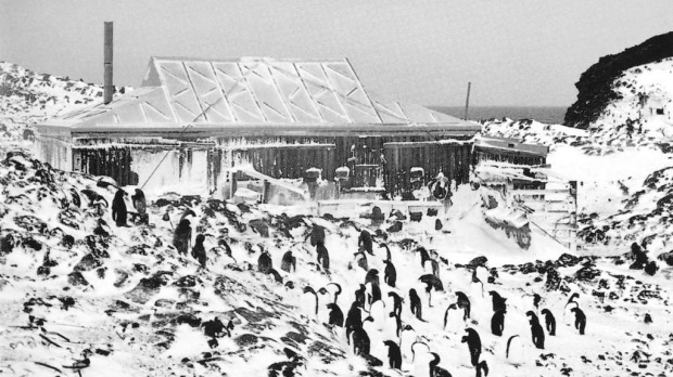 The Royds Hut was built  by Shackleton and later visited by Burke. The hut shared the low rocky hill with Antarctica's most southerly Adelie penguin rookery.        The Royds Hut was built  by Shackleton and later visited by Burke. The hut shared the low rocky hill with  Antarctica's most southerly Adelie penguin  rookery.