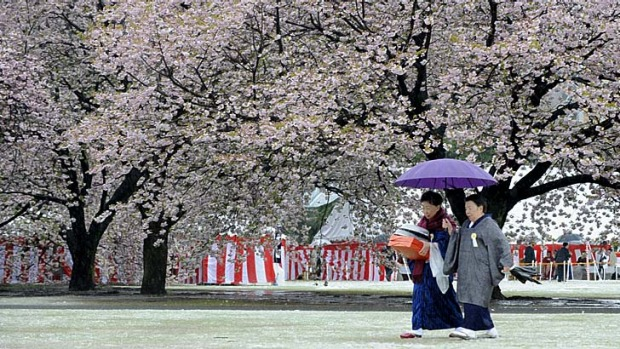 Blossoming ... women wearing kimonos walk on a snow-clad garden in Tokyo.