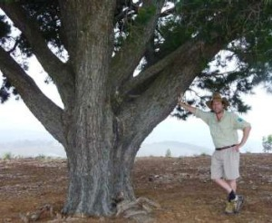 Tim under his favourite tree on Dairy Farmers Hill earlier this week