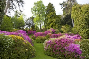 Pretty in pink ... azaleas in bloom in the gardens of VIlla Carlotta, Tremezzo. Photo: Corbis