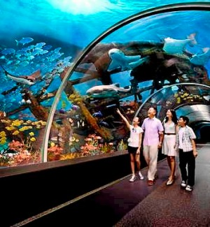 Under the sea ... the Marine Life Park.