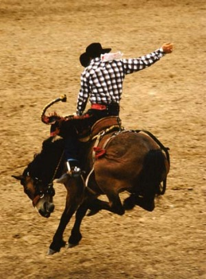 A bucking bronco rider in action at Snowmass Rodeo.