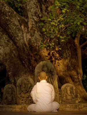 A Buddhist monk praying in front of sacred bodhi tree.