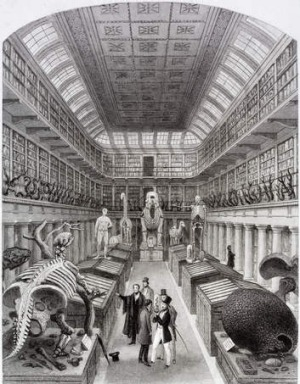 A 19th-century engraving of the Hunterian Museum.