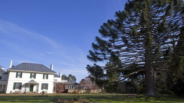 Preserved: the manor house, verdant grounds and towering Bunya pine at Brickendon Estate.