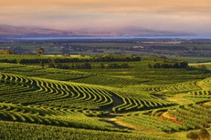 McLaren Vale, taken from Samuels Gorge near the Onkaparinga National Park  looking across the Gulf St Vincent.       ...