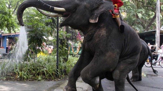 Assisted by its mahout, an elephant blows water from its trunk ahead of the Songkran festival at Dusit Zoo in Bangkok.