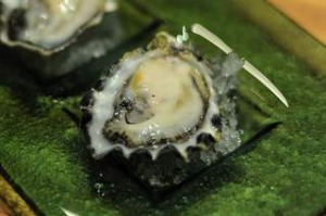 Plump Oyster